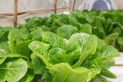 Azienda agricola della verdura di coltura idroponica Immagine Stock Libera da Diritti