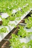 Azienda agricola della verdura di coltura idroponica Fotografia Stock Libera da Diritti