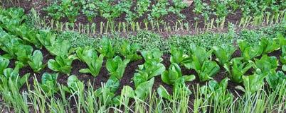 Azienda agricola della verdura e dell'erba fotografia stock libera da diritti