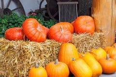Azienda agricola della zucca Fotografie Stock