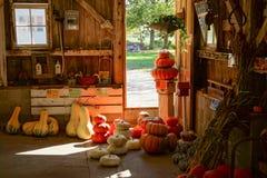 Azienda agricola della zucca e della zucca Fotografie Stock Libere da Diritti