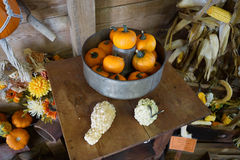 Azienda agricola della zucca e della zucca Immagini Stock Libere da Diritti