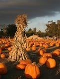Azienda agricola della zucca prima della tempesta Fotografia Stock Libera da Diritti