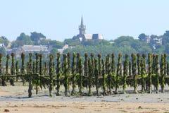 Azienda agricola delle cozze alla marea dell'acqua bassa Fotografia Stock
