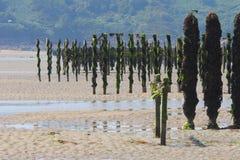 Azienda agricola delle cozze alla marea dell'acqua bassa Fotografia Stock Libera da Diritti