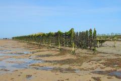 Azienda agricola delle cozze alla marea dell'acqua bassa Fotografie Stock