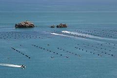 Azienda agricola delle cozze, isola del nord della Nuova Zelanda Fotografia Stock Libera da Diritti
