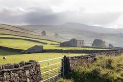 Azienda agricola delle pecore Fotografie Stock