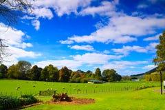 Azienda agricola delle pecore in Nuova Zelanda Immagine Stock Libera da Diritti