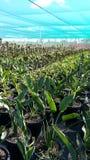 Azienda agricola delle piante Immagine Stock