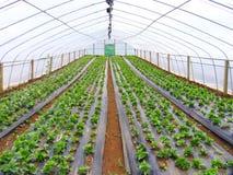 Azienda agricola delle verdure Fotografia Stock
