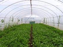 Azienda agricola delle verdure Immagine Stock Libera da Diritti