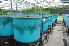 Azienda agricola di acquicoltura di agricoltura Fotografie Stock
