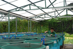 Azienda agricola di acquicoltura di agricoltura Fotografie Stock Libere da Diritti