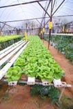 Azienda agricola di Aeroponic fotografia stock libera da diritti