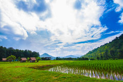 Azienda agricola di agricoltura Fotografie Stock Libere da Diritti