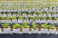 Azienda agricola di agricoltura Fotografia Stock Libera da Diritti