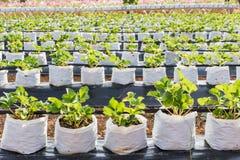 Azienda agricola di agricoltura Immagini Stock Libere da Diritti