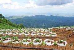 Azienda agricola di agricoltura sulla montagna Fotografia Stock Libera da Diritti