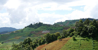 Azienda agricola di agricoltura sulla montagna Fotografia Stock