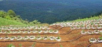 Azienda agricola di agricoltura sulla montagna Fotografie Stock Libere da Diritti
