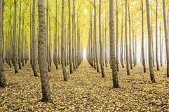 Azienda agricola di albero nella caduta con le foglie sulla terra Fotografia Stock