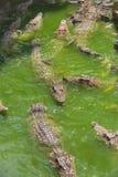 Azienda agricola di allevamento del coccodrillo in Siem Reap, Cambogia Immagini Stock Libere da Diritti
