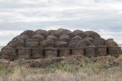 Azienda agricola di bestiame di Arge L'azienda agricola dello stato fornisce il latte e la carne all'intera regione di Volgograd Fotografie Stock Libere da Diritti