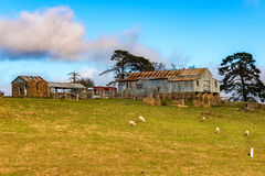 Azienda agricola di bestiame australiana di entroterra Fotografie Stock