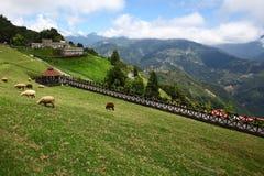 Azienda agricola di Chingjing Fotografia Stock Libera da Diritti
