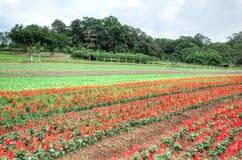 Azienda agricola di Cingjing, la contea di Nantou, Taiwan Immagine Stock