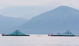 Azienda agricola di color salmone Fotografia Stock