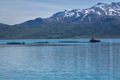 Azienda agricola di color salmone in Norvegia Immagini Stock