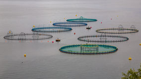 Azienda agricola di color salmone in Norvegia Immagini Stock Libere da Diritti