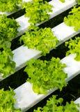 Azienda agricola di coltura idroponica Immagini Stock Libere da Diritti
