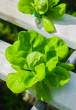 Azienda agricola di coltura idroponica Fotografie Stock Libere da Diritti