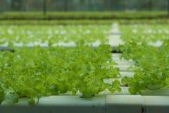 Azienda agricola di coltura idroponica Fotografia Stock
