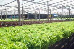 Azienda agricola di coltura idroponica in serra a Corofield, Tailandia Fotografia Stock