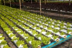 Azienda agricola di coltura idroponica in serra a Corofield, Tailandia Immagine Stock Libera da Diritti
