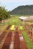 Azienda agricola di Cuba Fotografie Stock Libere da Diritti