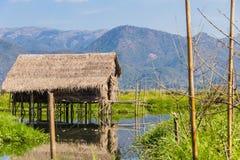Azienda agricola di galleggiamento, lago del inle nel Myanmar (Burmar) Immagini Stock Libere da Diritti