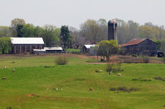 Azienda agricola di lavoro Immagine Stock