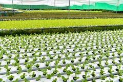 Azienda agricola di metodo di coltura idroponica Fotografie Stock Libere da Diritti