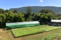 Azienda agricola di metodo di coltura idroponica Fotografia Stock Libera da Diritti