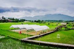 Azienda agricola di Paco Fern fotografia stock