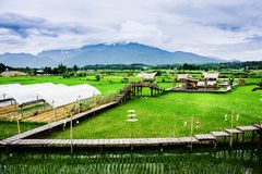 Azienda agricola di Paco Fern fotografia stock libera da diritti