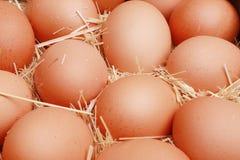 Azienda agricola di pollo Immagine Stock Libera da Diritti