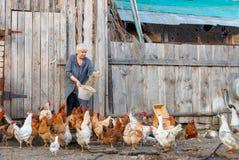 Azienda agricola di pollo Fotografia Stock