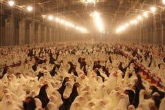 Azienda agricola di pollo Fotografie Stock