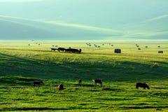 Azienda agricola di riserva fotografia stock libera da diritti